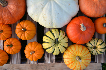 Flat lay composition of different pumpkins