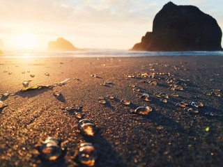 Tiny Jellyfish Strewn Across Sandy Ocean Shore At Sunset