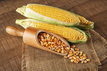Composition with fresh corn on wooden background
