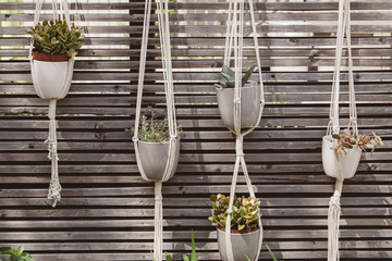 Row of hanging macrame plant holders
