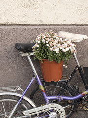 Planter with fading chrysanthemums on the back of a bicycle