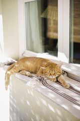 Portrait of cat sleeping outdoor behind curtains on windowsill