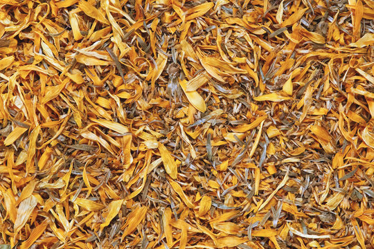 Texture background of dried flowers calendula officinalis or marigold