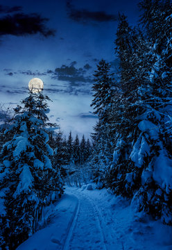 path through spruce forest in winter. beautiful nature scenery with snowy trees at night in full moon light