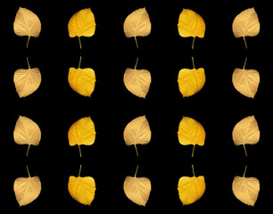 Collage of yellow autumn leaves on a black background