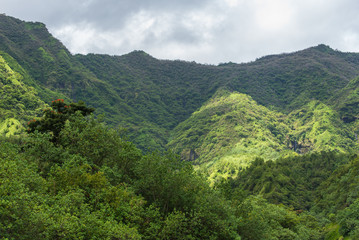 Tahiti, Papenoo valley in the mountains, luxuriant bushy vegetation