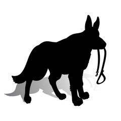 Silhouette of a Dog (German Shepherd) holding a leash, on a white background.
