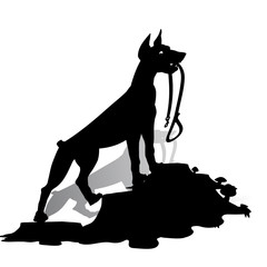 Silhouette of a Dog (Doberman Pinscher) holds a leash, and looks up, on a white background.