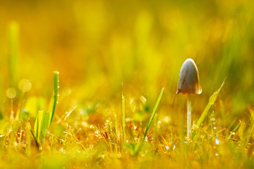 Poisonous mushrooms in the grass