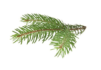 Christmas tree branch isolated on white background closeup