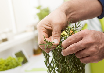 Cook picking homegrown rosemary