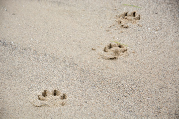 Footprints of dog's paw in the sand