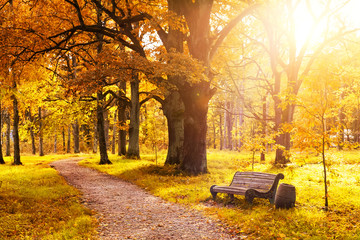 Old wooden bench in the autumn park