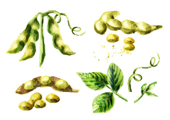 Soy compositions and elements set. Watercolor hand drawn illustration.