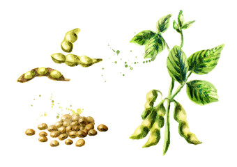 Soybean plant with leaves, pods and beans set. Watercolor hand drawn illustration.