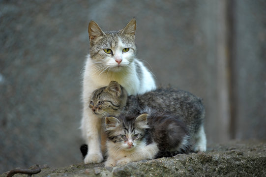 homeless cat with kittens on the street