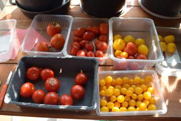 reiche Ernte roter und gelber Tomaten