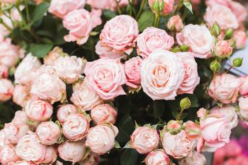 Pink roses on a flower market