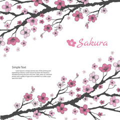 Sakura branch with sweet pink flowers on white background.