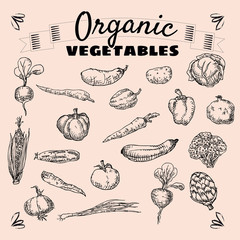 Organic fruits and vegetables, food, hand drawing, vector, banner, vintage, illustration