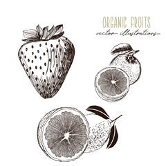 Strawberry, grapefruit, lemon -organic fruits drawings