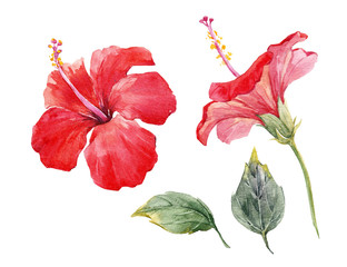 Watercolor hibiscus flower set