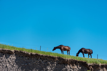 horses on a grassy hilltop