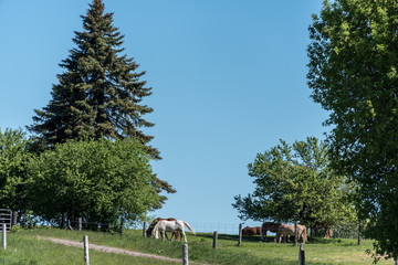 horse pasture in the country