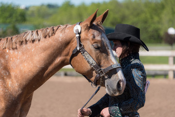 Cowgirl checking posture of horse for competition