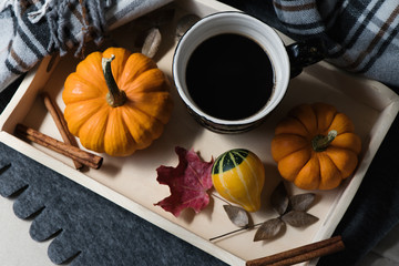 Pumpkin, gourds, and a cup of coffee. Fall or autumn blanket. Selective focus, copy space