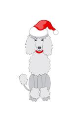 santa poodle girl