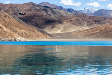"Pangong Tso, Tibetan for ""high grassland lake"", also referred to as Pangong Lake, is an endorheic lake in the Himalayas situated at a height of about 4,350 m"