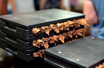 Homemade cigars good tobacco