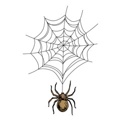 Spider on the web, colorful scary Halloween sketch illustration. Vector