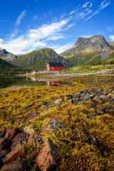 Wall Mural - Stones and seaweed on a beach on Lofoten islands in Norway