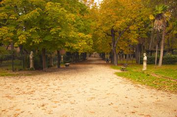 yellow autumn trees. season. autumn walks. a park . autumn alley