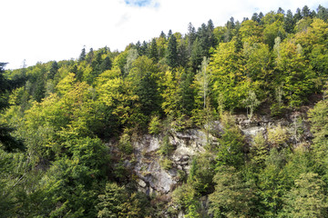 spruce forest on a rock under the sky