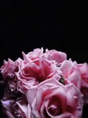 many roses in dark room