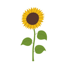 Sunflower icon cartoon.