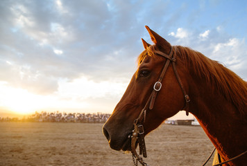Horse with bridle in rodeo ring