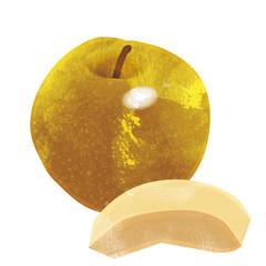 Watercolor 水彩 秋の味覚のイラスト 梨  Illustration of pear