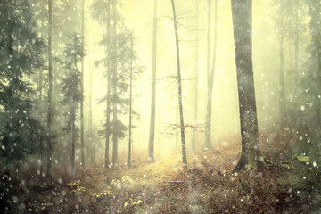 Wall Mural - Magical autumn colored foggy forest fairytale with rainfall. Color filter effect used.