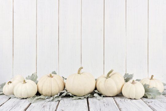 Autumn border arrangement of white pumpkins and silver leaves with a white wood background