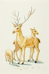 Watercolor painting illustration lovely  cartoon  of  deer family and baby