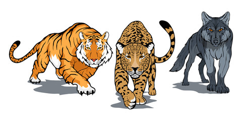 Set of animals including Bengal tiger, leopard, wolf