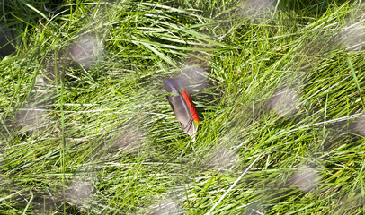 Feather on the grass, close-up