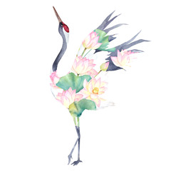 Watercolor print with crane of lotus flowers. Japanese hand drawn illustration