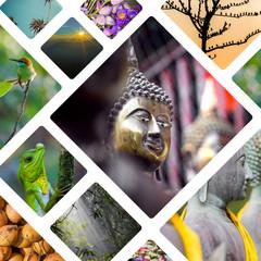 Collage of India and Sri Lanka images - travel background