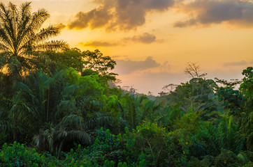 Photo sur Plexiglas Jungle Beautiful lush green West African rain forest during amazing sunset, Liberia, West Africa