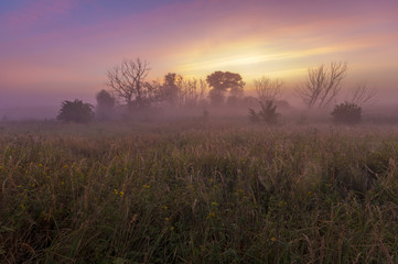 misty and colorful sunrise on a wild meadow